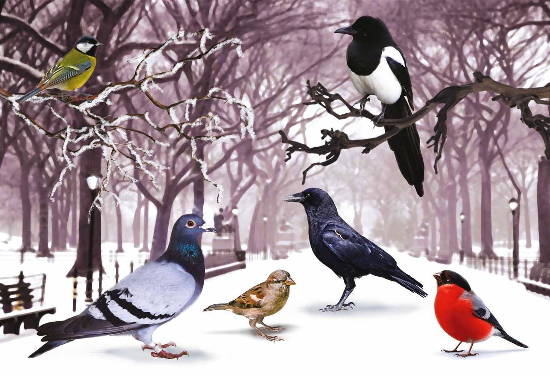 Картинки на тему птицы зимой