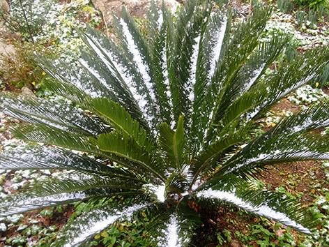 Cica en invierno cubierta de nieve