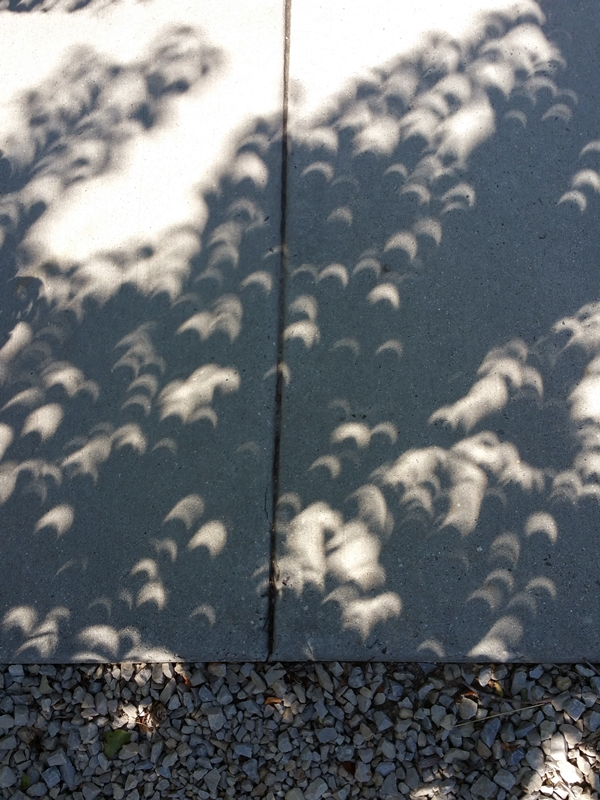 Shadows through the trees during the eclipse (August 21, 2017) Photo by Susan Carlson of Felted Button -- Colorful Crochet Patterns