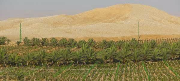 SAHARA VINEYARDS EN DESIERTO DE EGIPTO