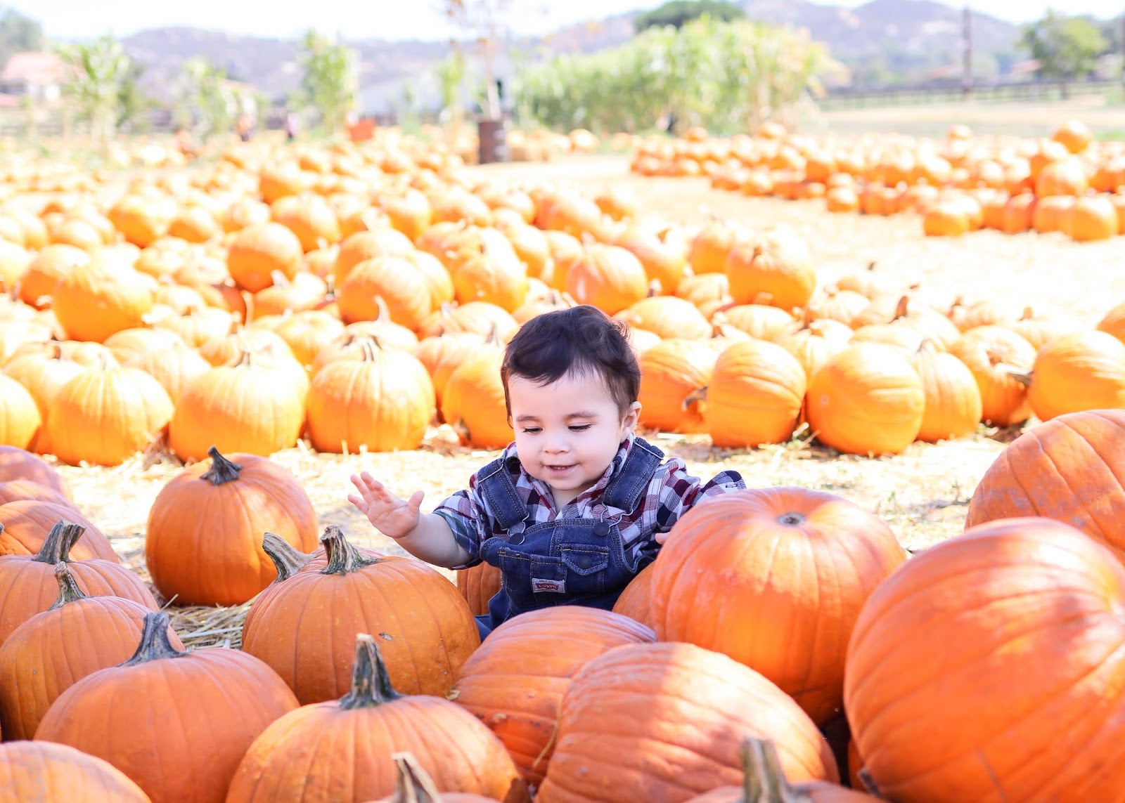 best pumpkin patch in san diego, top 5 pumpkin patches in san diego