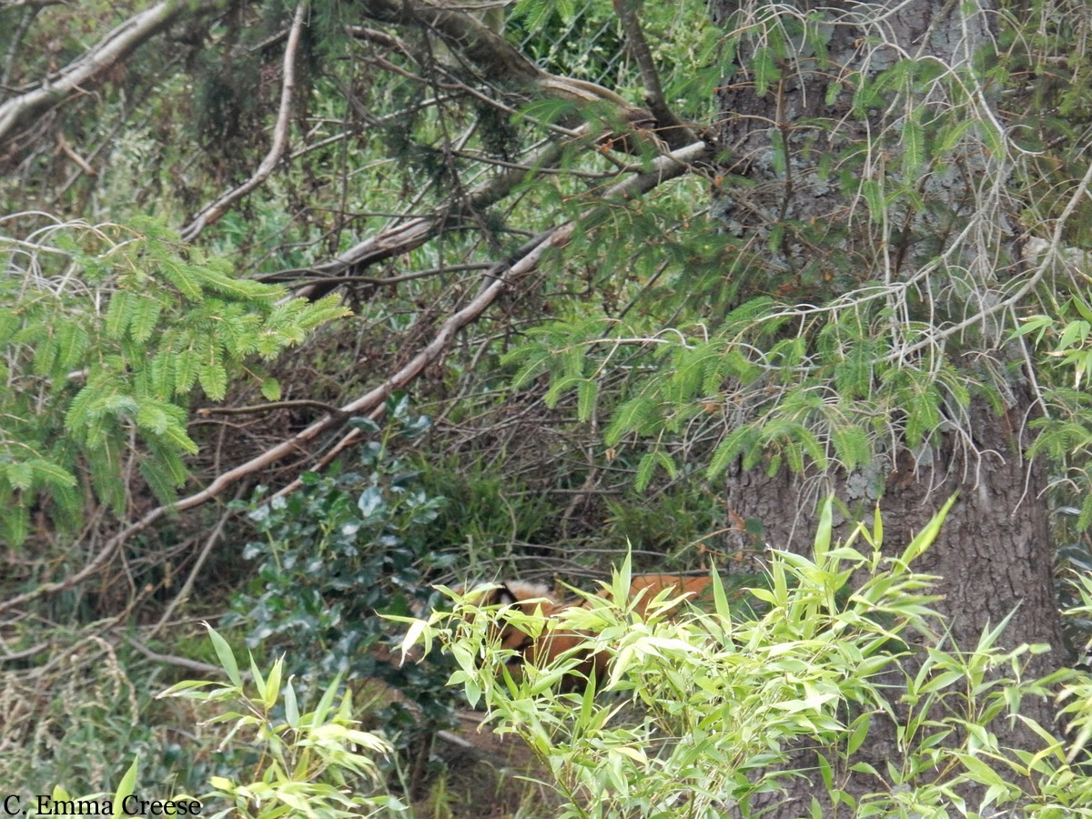 Wellington Zoo, New Zealand - Adventures of a London Kiwi