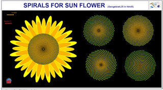 http://dmentrard.free.fr/GEOGEBRA/Maths/export4.25/Sunflower.html