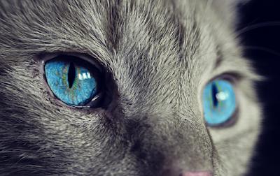 Pixabay.com - Cat