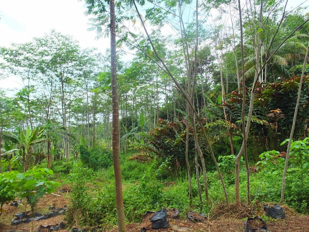 DSCF1815+(FILEminimizer) Jual Tanah Kebun Albasiah 6 HA Di Kec Pacet Jual tanah di cipanas