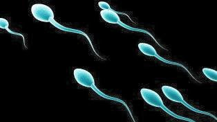 The Spiritual Dignity And Interpretation of Human Sperm Cell