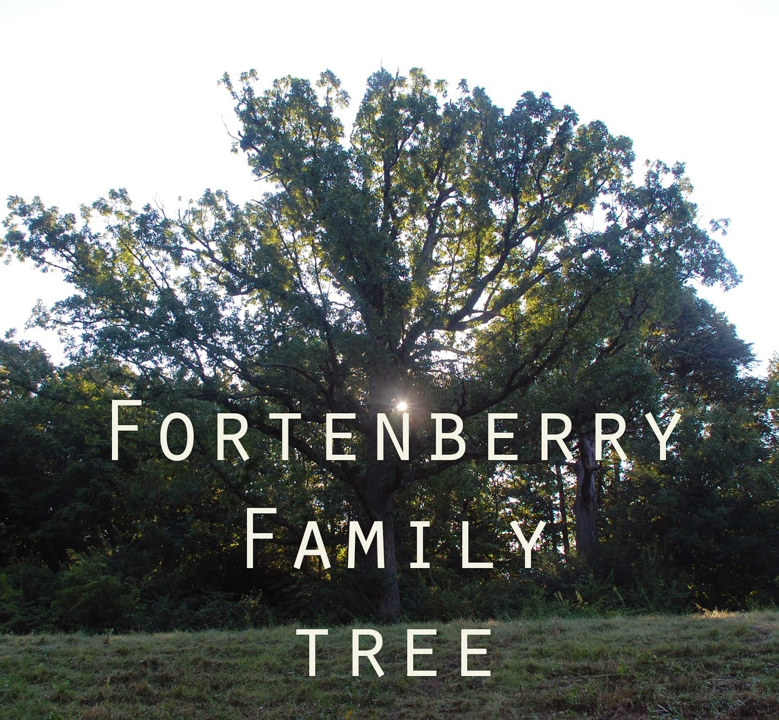 Fortenberry Tree