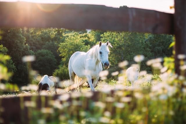 【時間力課程-學員心得】Jovi-讓你擁有兩匹上駟馬的時間力課程