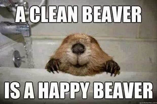 Funny A Clean Beaver is a Happy Beaver Joke Picture