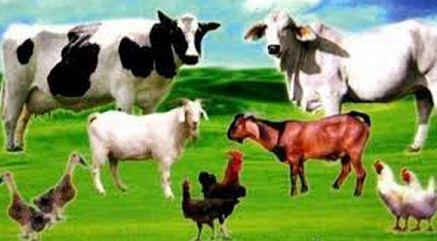 Image result for hewan ternak