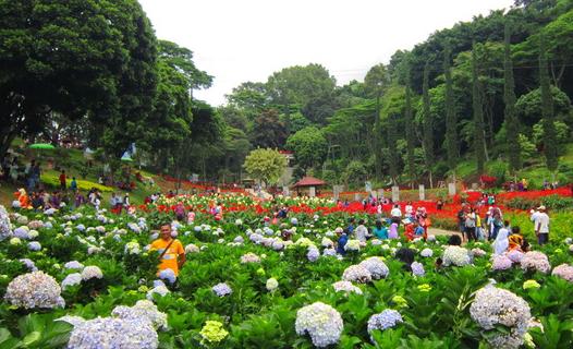 Tunjukkan indahnya Malang sebagai kota bunga pada sang balita.