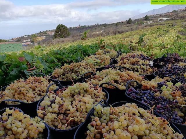 Ciudadanos demanda mayor apoyo al sector vitivinícola canario