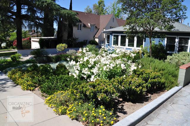 Drought Tolerant landscape planted sparingly yields abundant flowers :: OrganizingMadeFun.com