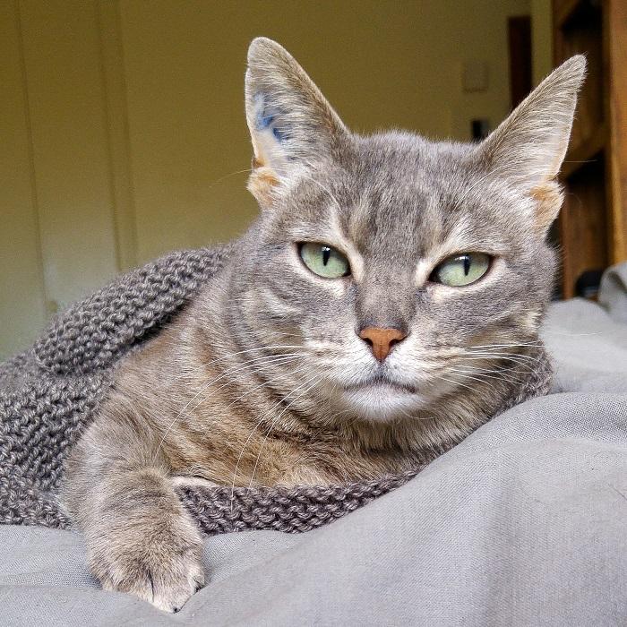 Photo de Châtaigne, chatte tigrée Hello c'est Marine