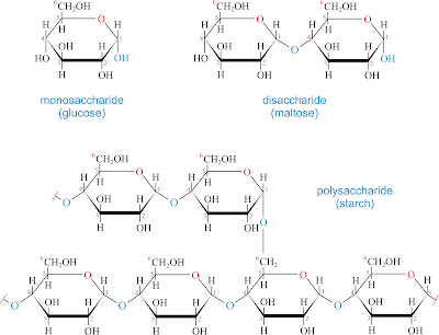 Cac loai carbohydrate