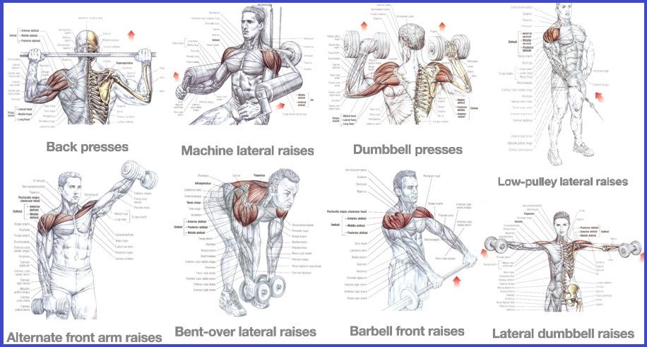 Shoulder Exercises For Mass - all-bodybuilding.com