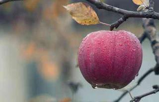 15 Benefits of eating Apple in hindi-सेब खाने के फायदे।