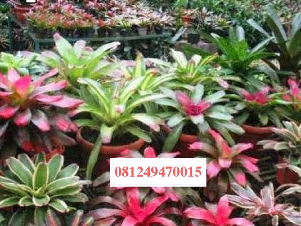 Berpengalaman lebih dari 10th dalam pengerjaan dunia tanaman pohon 10eda20827