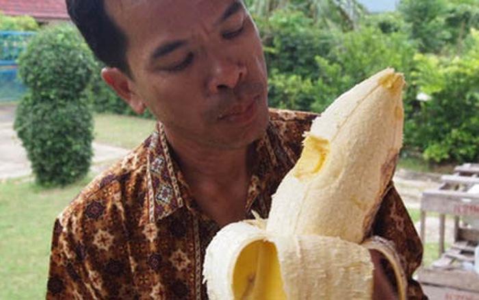 Giống chuối khổng lồ ở Papua New Guinea