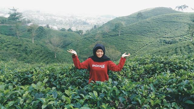 foto kebun teh kemuning