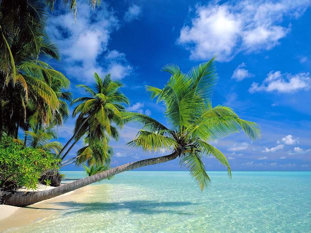 Hawaii Beaches Palm Trees
