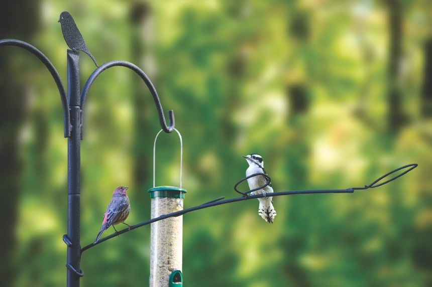 birding house to poles and bird songbird hook home pole heavy for best me medium close piece feeder set feeders at easy reach garden improvement duty extended image deck shows install