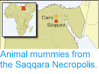 http://sciencythoughts.blogspot.com/2019/02/animal-mummies-from-saqqara-necropolis.html