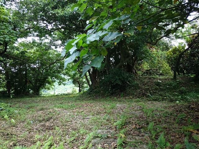 イビの森の写真