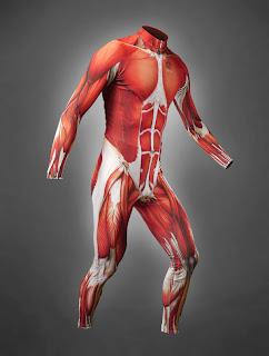 Traje con músculos sin piel estilo Robbie Williams.