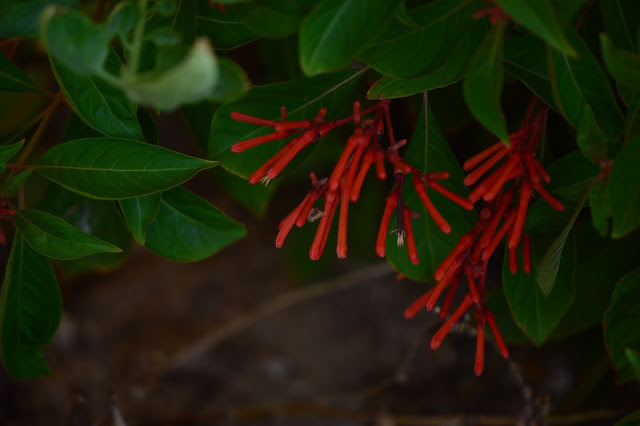 garden bloggers bloom day, summer, desert garden, small sunny garden, amy myers,
