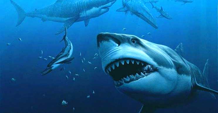 Canavar köpek balığı olarak da bilinen bu deniz canlısı önüne çıkan her şeyi yiyordu.