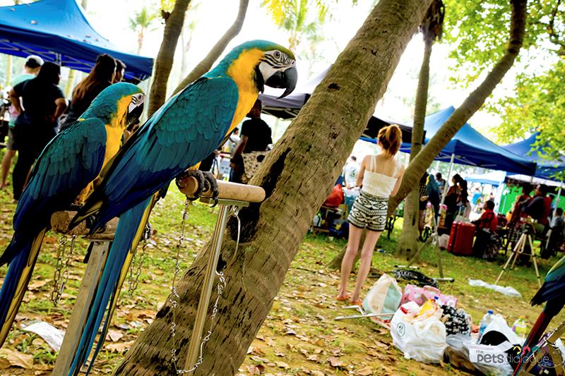 bird gathering Singapore