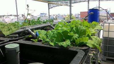 bao-gia-he-thong-aquaponics
