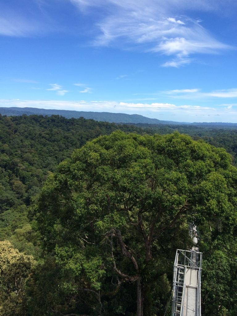Tropical life in Brunei: ブル...