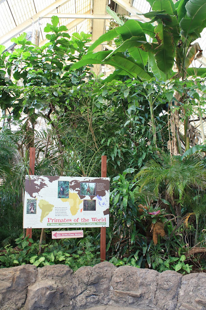 Tropical Rainforest home for primates at the Pittsburgh Zoo