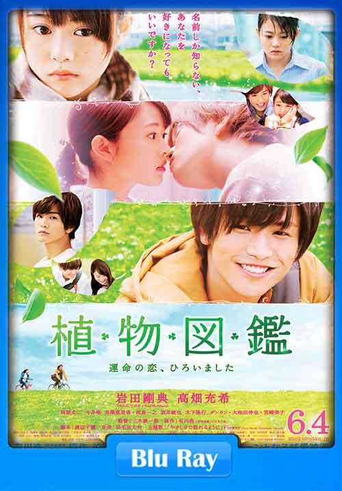 Evergreen Love 2016 Poster