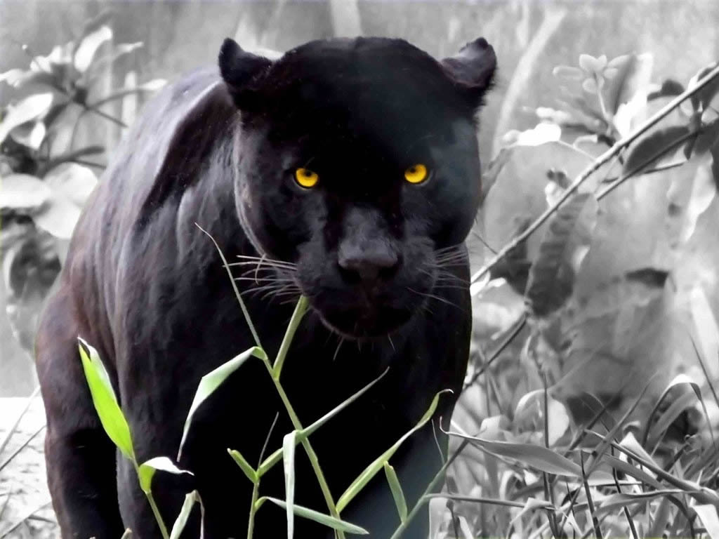 Animal Photo: November 2011 - photo#10