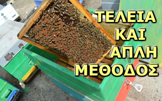 Βάζουμε πατώματα με άχτιστα πλαίσια! Η πιο αποτελεσματική μέθοδος επαγγελματία μελισσοκόμου...