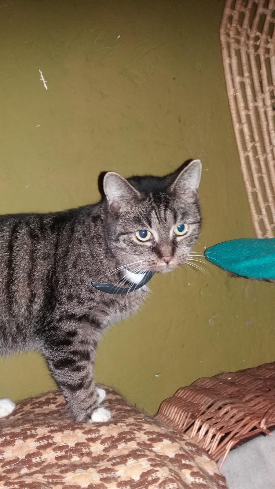 Fotky mladé pevné kočičky