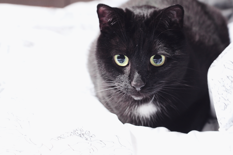 chat aveugle, blind cat