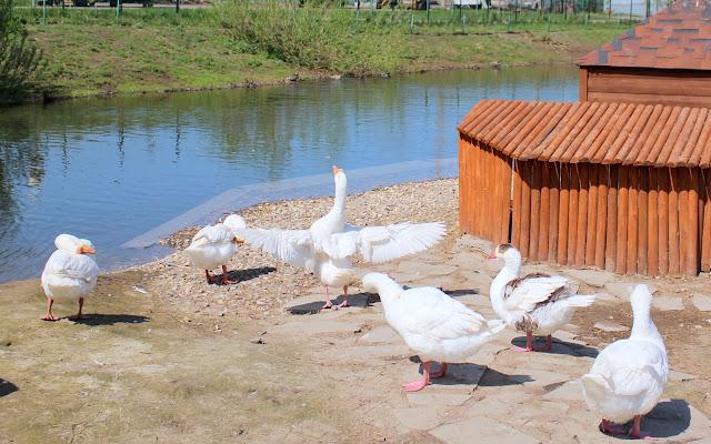водоемы в зоопарке Ярославля