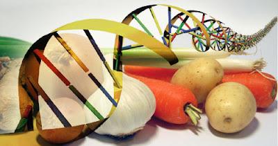 Cibi OGM