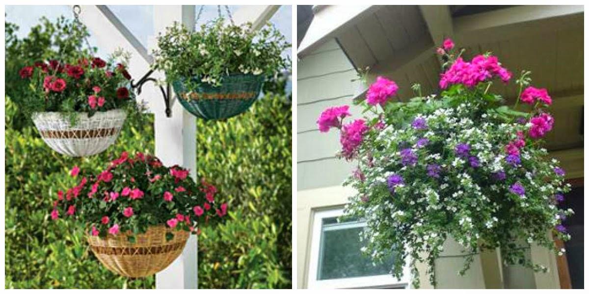 Dise a tu vida plantas para patios peque os - Plantas colgantes de exterior ...