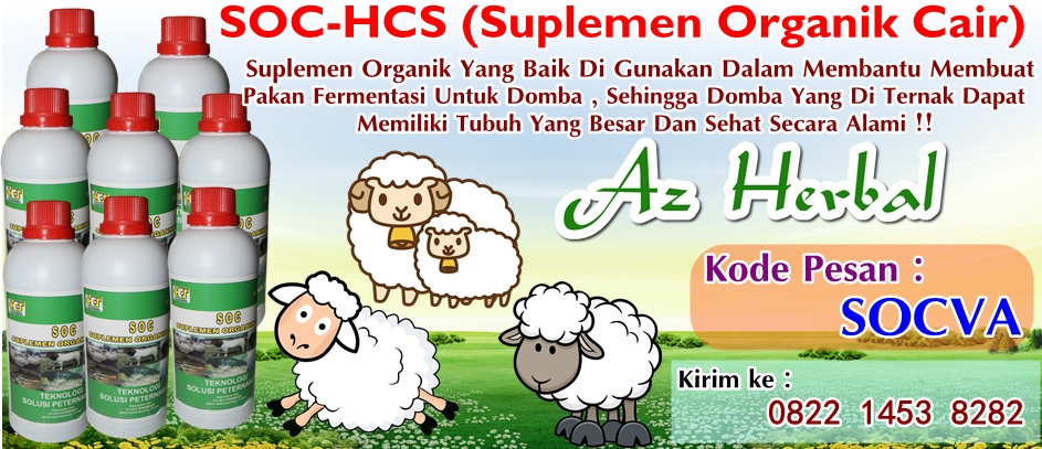 Cara Aman Membuat Pakan Fermentasi Ternak Domba