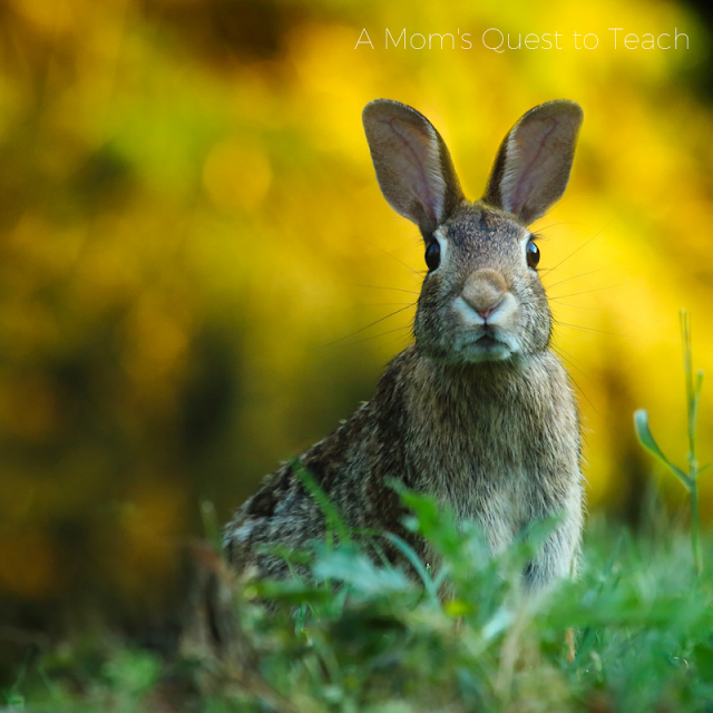 photo of rabbit from canva