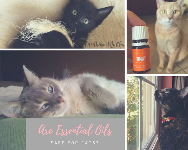 Essential Oils Safe For Cats But Cats Don T Like