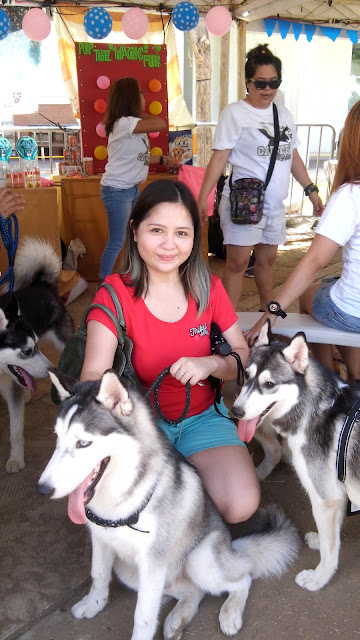 animal blogger philippines, siberian husky,