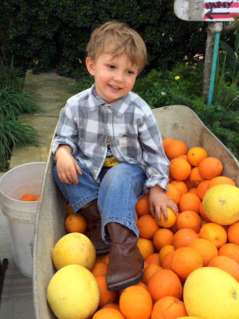 Healthy Fresh Squeezed Orange Juice from the Smith Trees