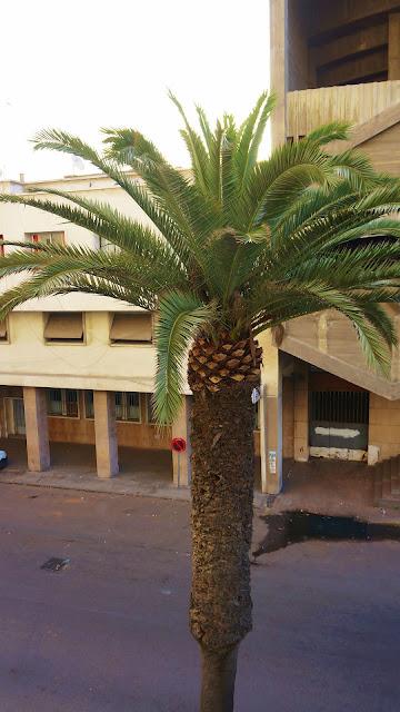Изображение пальмы за окном отеля, Касабланка