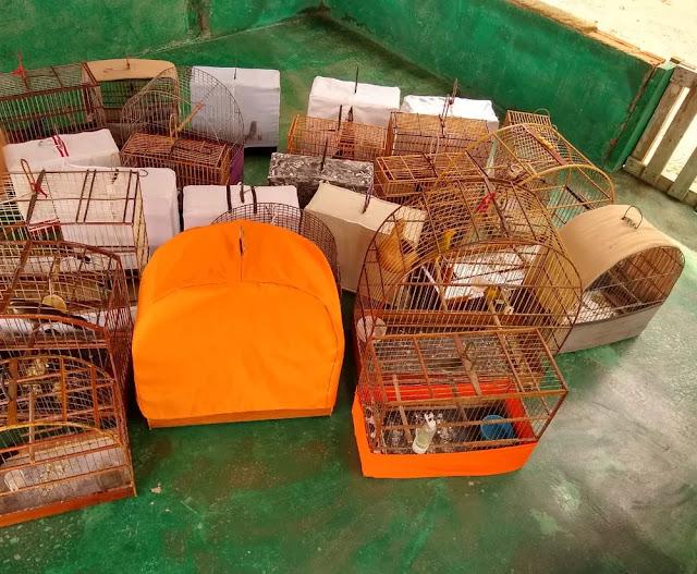 Polícia apreende 25 aves em cativeiro ilegal em Nova Mamoré
